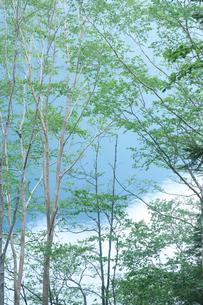 日光の湖と新緑の写真素材 [FYI01422737]