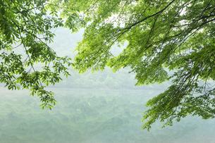 日光の新緑の湖の写真素材 [FYI01422898]