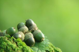 森の中の木の実の写真素材 [FYI01422975]