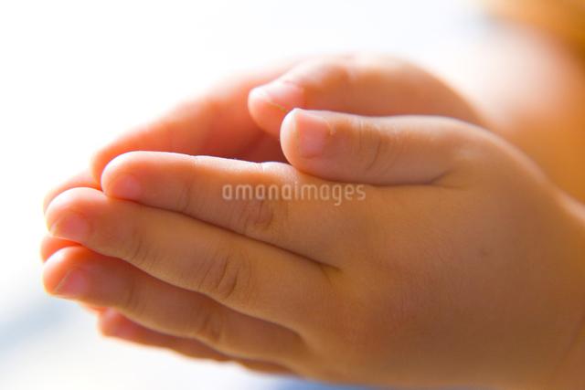 合わせた子供の手の写真素材 [FYI01423112]
