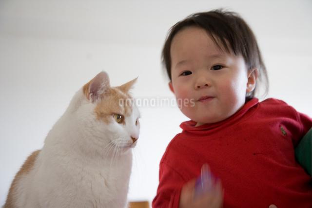 猫と男の子の写真素材 [FYI01423202]