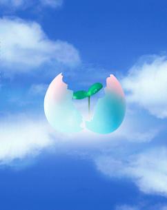 卵の殻と芽と雲 合成のイラスト素材 [FYI01423240]