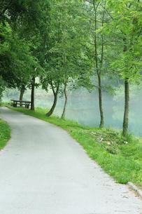 クロアチア ラストケ村の並木道の写真素材 [FYI01423317]