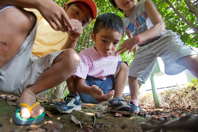 土の中を覗き込む子供達の写真素材 [FYI01423634]