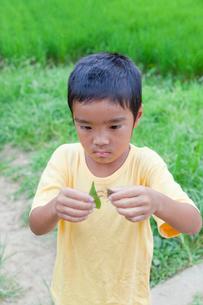 ザリガニを持つ男の子の写真素材 [FYI01423938]