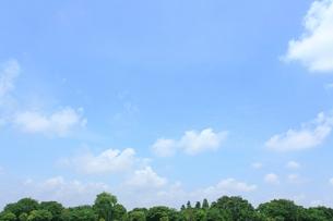 新緑と空の写真素材 [FYI01425035]