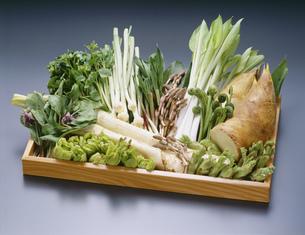 春の山菜の写真素材 [FYI01425148]