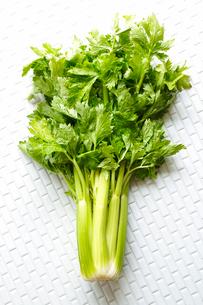 セロリー・野菜の写真素材 [FYI01425630]