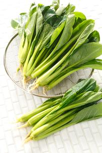 小松菜の写真素材 [FYI01425723]