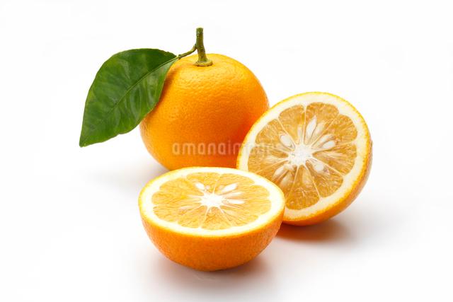 だいだい(橙)の写真素材 [FYI01425752]