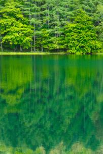 御射鹿池(みしゃかいけ)・新緑と池の写真素材 [FYI01425754]