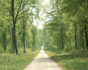 タンポポ咲く道と林の写真素材 [FYI01426203]