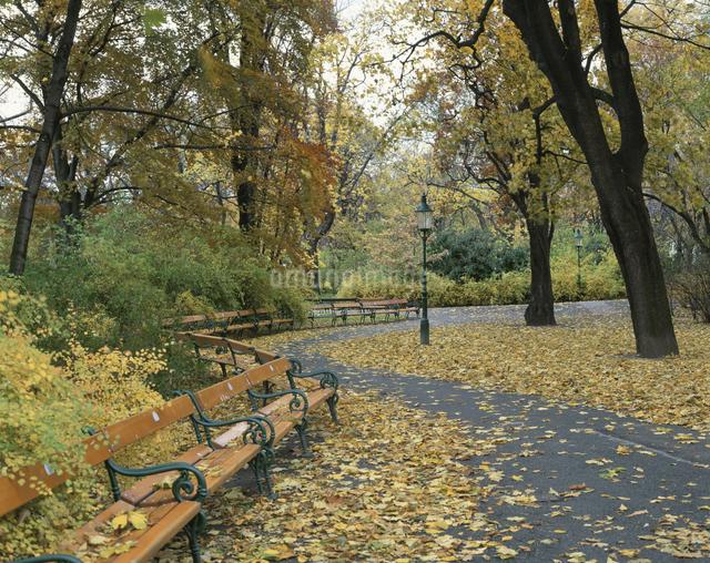 市立公園のベンチと木立の写真素材 [FYI01426424]