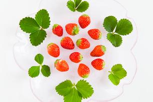 イチゴの実と葉の写真素材 [FYI01426562]