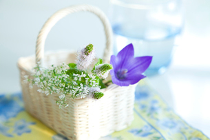 かごに入ったキキョウとミントの花とコップの水の写真素材 [FYI01426761]