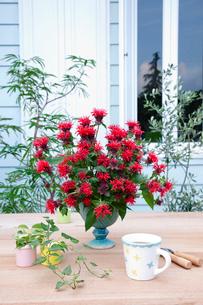 庭のテーブルのモナルダの花とマグカップとミニ観葉の写真素材 [FYI01426775]