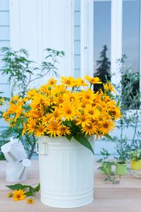 庭のテーブルのヒメヒマワリの花とジョロとミニ観葉の写真素材 [FYI01426791]
