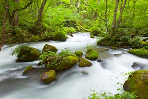 奥入瀬渓流流れの写真素材 [FYI01427043]