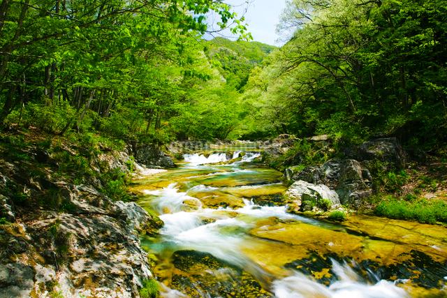 新緑の男鹿川の流れの写真素材 [FYI01427073]