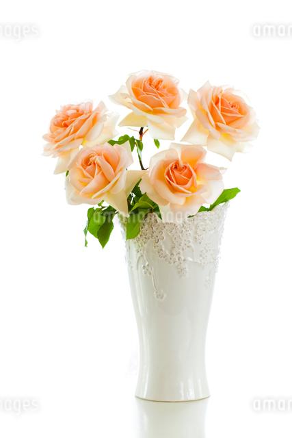 白い花瓶のうすいピンクのバラの花の写真素材 [FYI01427115]