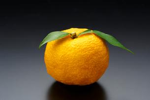 ゆず(柚子)の写真素材 [FYI01427209]