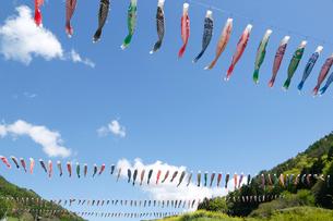 青空に泳ぐ鯉のぼりの写真素材 [FYI01427223]