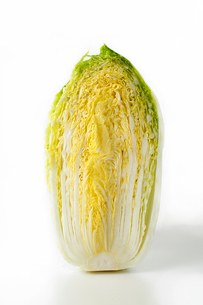 白菜の写真素材 [FYI01427281]