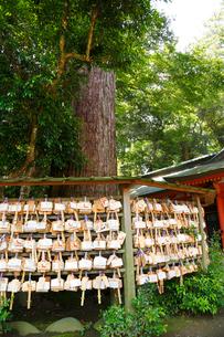 鹿島神宮・二郎杉と絵馬の写真素材 [FYI01427763]