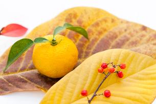 ポポーの葉の上のユズとツルウメモドキの実の写真素材 [FYI01427862]