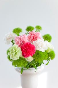 白い花瓶のカーネーションとナデシコ・グリーントリュフの写真素材 [FYI01427944]