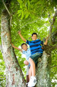 木登りして遊ぶ少年たちの写真素材 [FYI01428058]