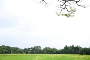 草原と木の小枝の写真素材 [FYI01428155]