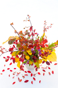 ユズと秋の実と花と紅葉した葉の写真素材 [FYI01428221]