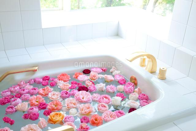 ピンクと白と赤のバラの花の入ったお風呂の写真素材 [FYI01428322]