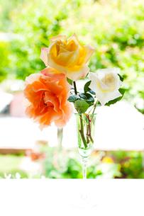 シャンパングラスのオレンジ色と白と黄色のバラの花の写真素材 [FYI01428346]