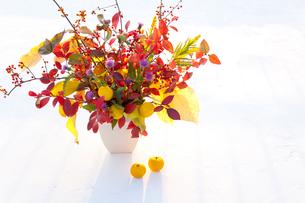 秋の実と紅葉する葉とユズの写真素材 [FYI01428370]