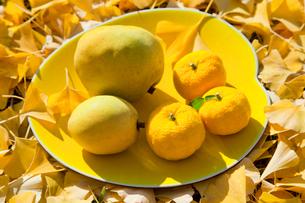 黄色い皿の上のユズとカリンとイチョウの落葉の写真素材 [FYI01428387]