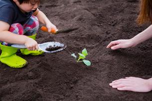 野菜の苗を植える母子の写真素材 [FYI01428389]