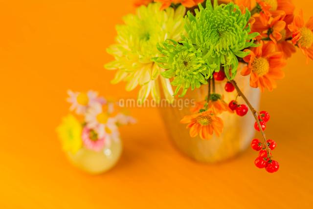 キクの花とツルウメモドキと陶器の花瓶の写真素材 [FYI01428673]