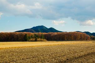 稲刈り後の田と羽黒山の写真素材 [FYI01428728]