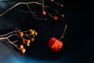 赤いバラの実とホオズキの写真素材 [FYI01428846]