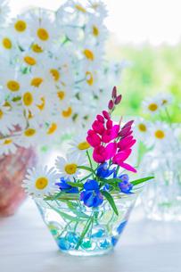 マーガレットとイキシアの花とガラスの花瓶の写真素材 [FYI01428856]