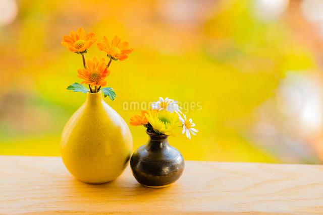 小さな花瓶のキクの花とクジャクソウの花の写真素材 [FYI01428881]