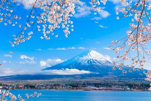 河口湖のサクラと富士山の写真素材 [FYI01428964]
