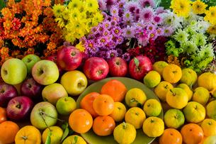 秋の味覚とキクの花の写真素材 [FYI01429019]