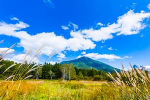 秋の男体山と戦場ヶ原の写真素材 [FYI01429035]