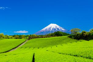 茶畑と富士山の写真素材 [FYI01429063]