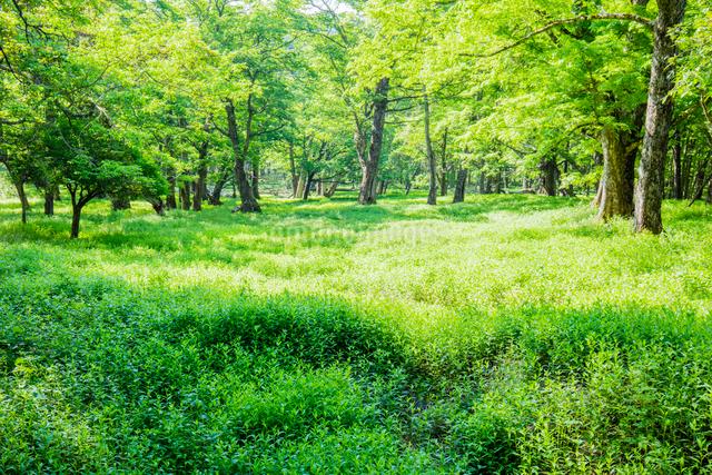 草原とハルニレとミズナラの森の写真素材 [FYI01429101]