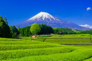 茶畑と富士山の写真素材 [FYI01429122]