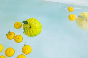 シシユズとユズの柚子風呂の写真素材 [FYI01429179]